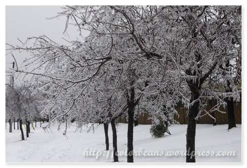 被凍雨(Freezing Rain)冰封的街樹