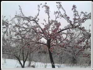 公園也被冰封