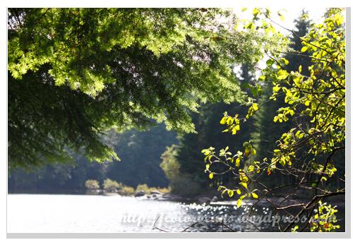 Rice Lake湖岸