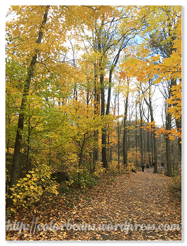 Nassagaweya Trail