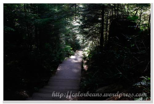 Lynn Canyon Park 步道很舒服
