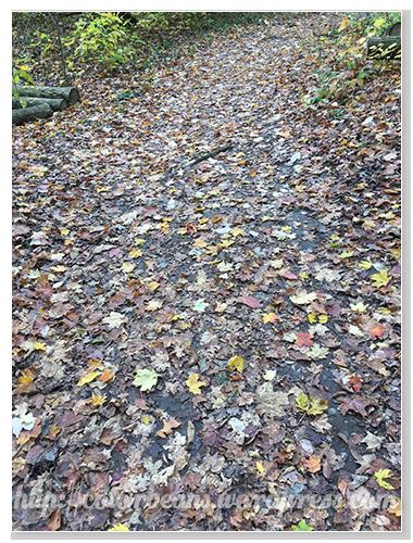 落葉還挺美ㄋ