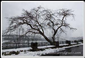 Niagara-Falls 很有fu的一棵樹
