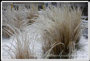 芒草也都被冰凍摟
