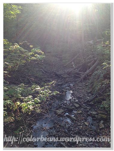 Tiffany Creek