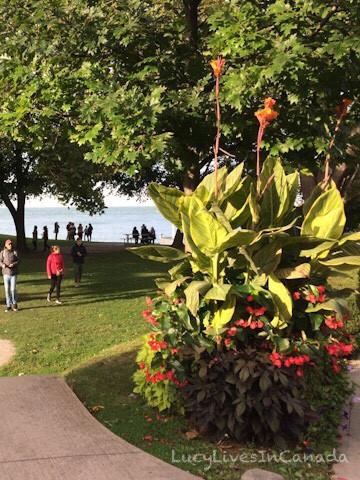 我超喜歡Niagara-on-the-Lake小鎮的花