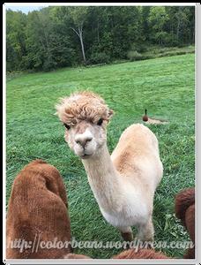 Hi, 我是Alpaca 羊駝