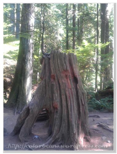 Lynn Canyon Park 很有造型的枯木