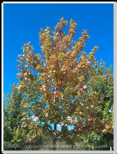 才九月初,有些樹葉已經開始轉紅色了