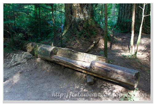 Lynn Canyon Park 最自然又實用的椅子