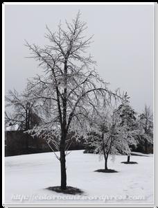 結冰的樹枝配上雪白的大地,太漂亮摟!