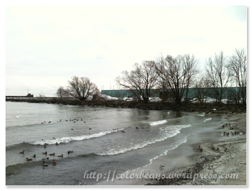 Lake Ontario 湖面上的鳥兒