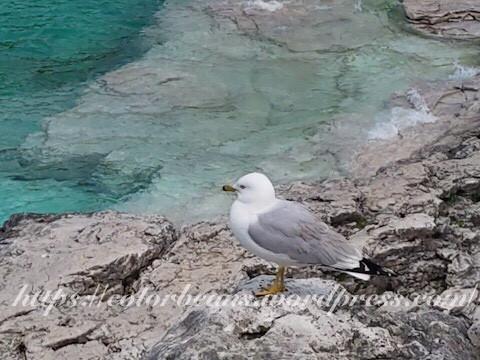 佔了好位置一直不肯離開的海鷗