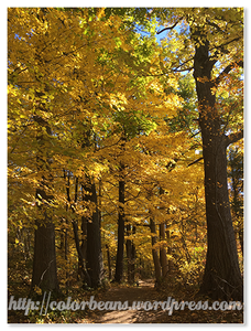 Dundas Peak楓葉都變色摟