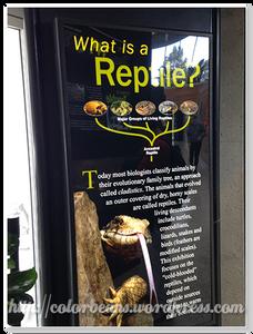 近期的展覽室爬蟲類展