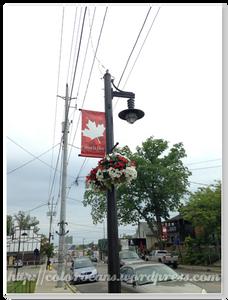紅白花的花籃懸掛在各街燈上,很搶眼