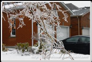 結冰的樹枝特寫一下
