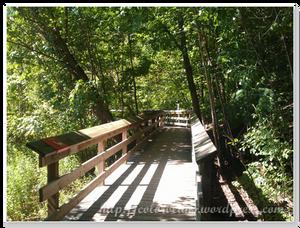 森林公園一定會有的木造小徑