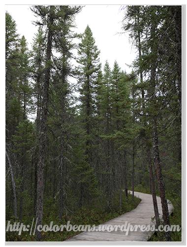 人煙較稀少的Spruce Bog Boardwalk