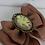 Thumbnail: Broche camée