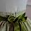 Thumbnail: Jupe collection Charlotte Brontë