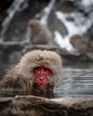 Snow Monkey Park 4x5 (1 of 1).jpg