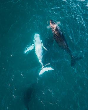 whales 3 (1 of 1).jpg