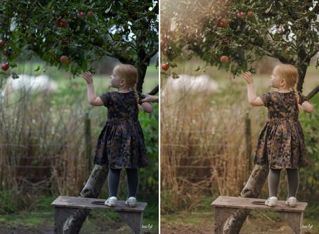 Nazomer appelboom fotoshoot