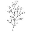 BotanicalElements-11.png