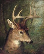"""Edwin Henry Landseer, """"Safe in the Forest"""""""