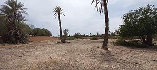A vendre un terrain à la palmeraie de Marrakech, titré, sur 1 hectare, clos de murs, électricité, puits, avec un très bon voisinage. Pas de piste.