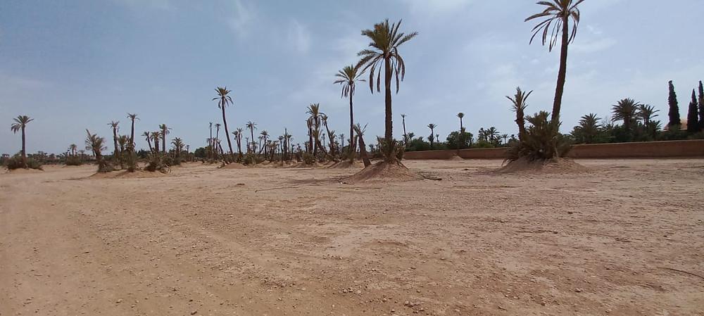 Investissez dans un terrain à la palmeraie de Marrakech. Quelles sont les meilleures sont selon l'agence immobilière Corner Immo.