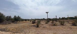 Terrain à vendre à la palmeraie de Marrakech. Titré, un hectare dans un des meilleurs secteurs de la palmeraie, clos de mur (à revoir), électricité, eau de la commune. Dossier sur demande uniquement.
