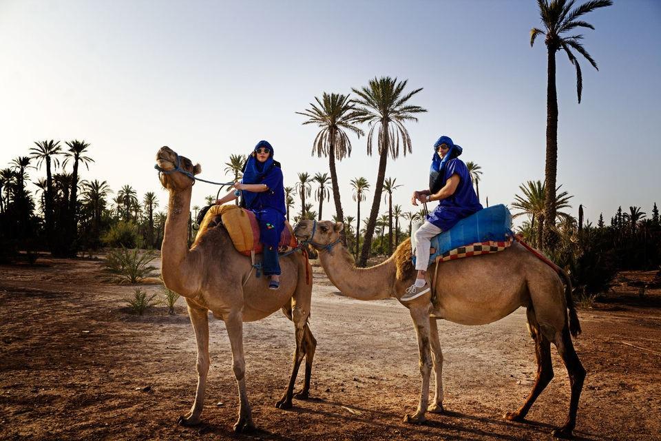 dromadaire palmeraie marrakech