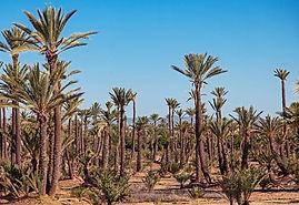 location villa a Marrakech par PARTICULIER
