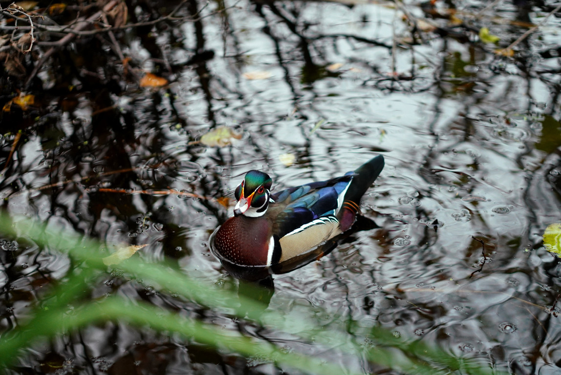 Duck & nature shooting