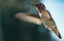 birds-watching.jpg