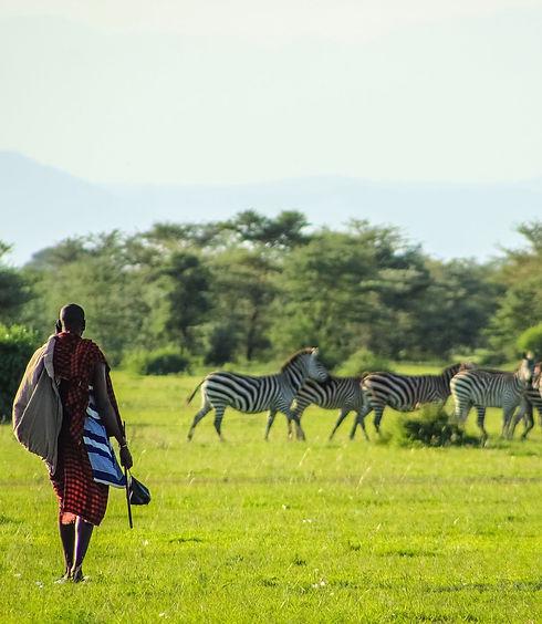 zebras-in-park.jpeg