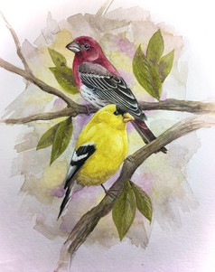 Finches SOLD