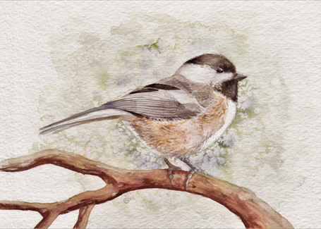 Black Capped Chickadee SOLD *Prints Available