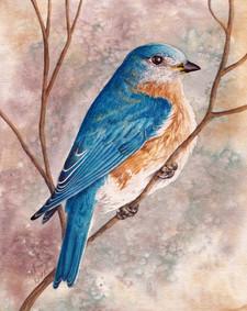 Eastern Bluebird SOLD