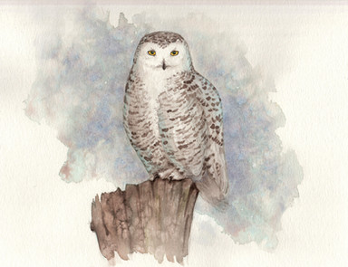 "Snowy Owl 8x10"" $200 *Prints Available"