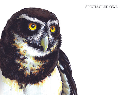 SPECTACLED OWL Joseph Grice 2019