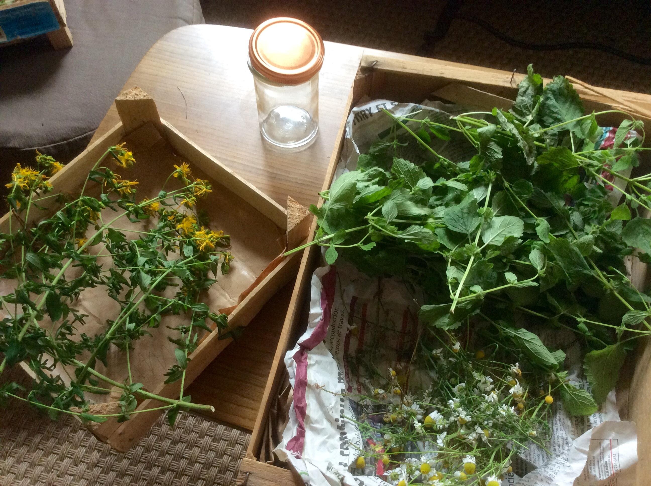 atelier d'usage des plantes