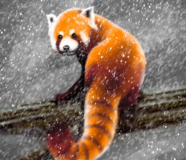 Joseph Grice Red Panda Digital Illustration