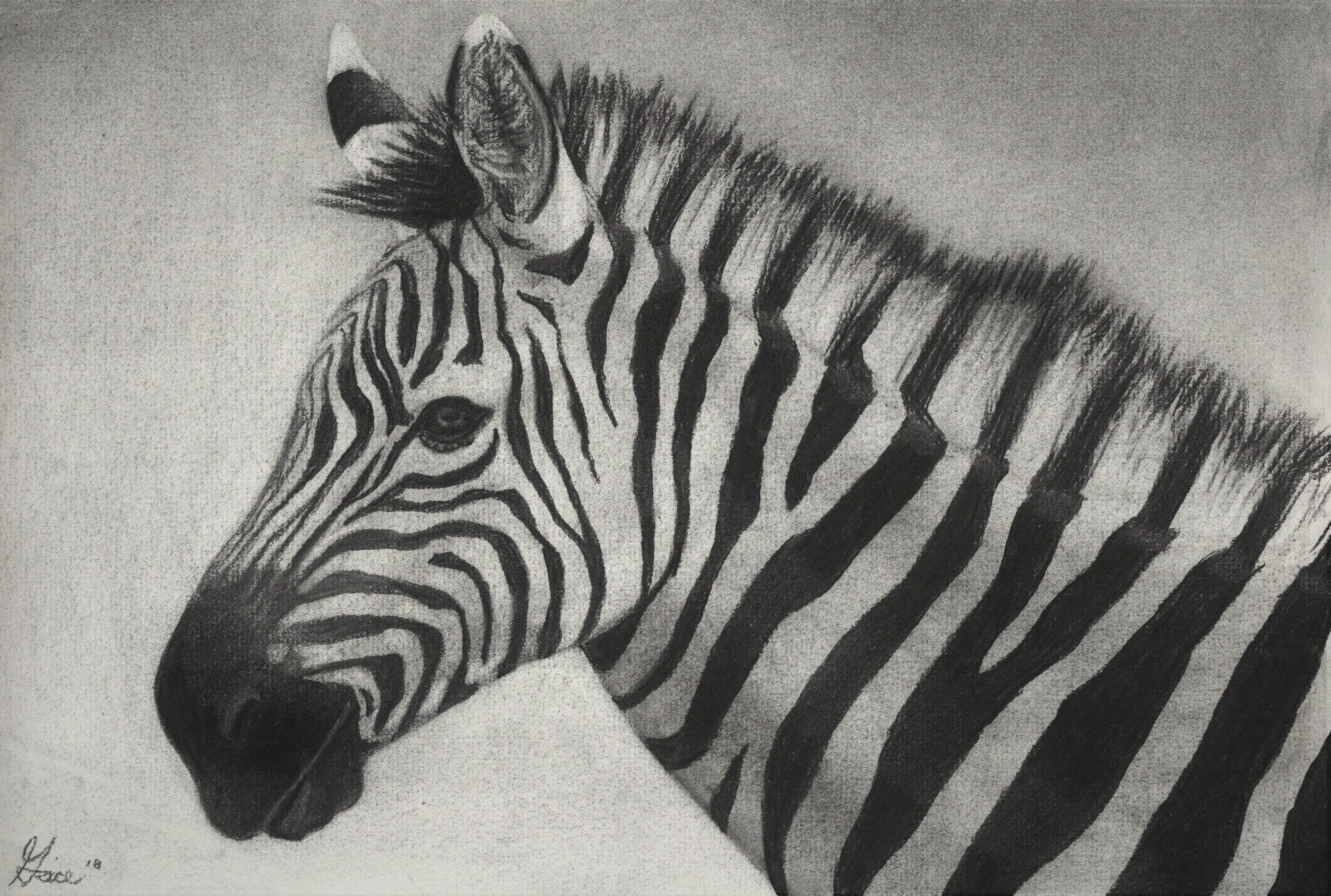 Zebra 2018