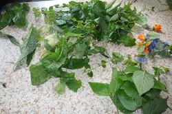 salade sauvage