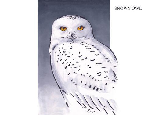 SNOWY OWL Joseph Grice 2019