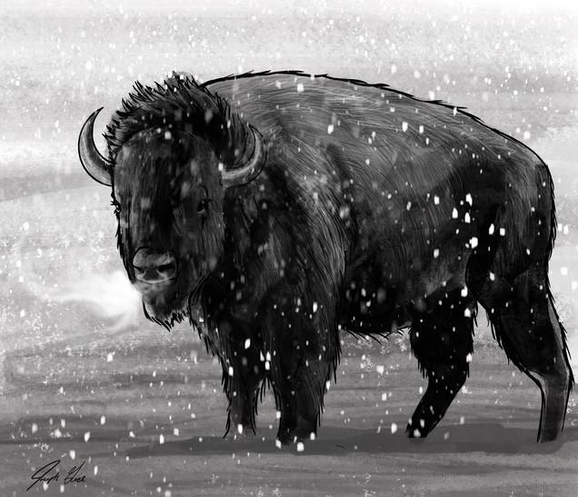 Joseph Grice Buffalo Digital Illustration