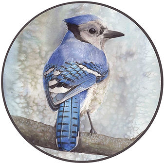 Joseph Grice Art Watercolor Bluejay Pain